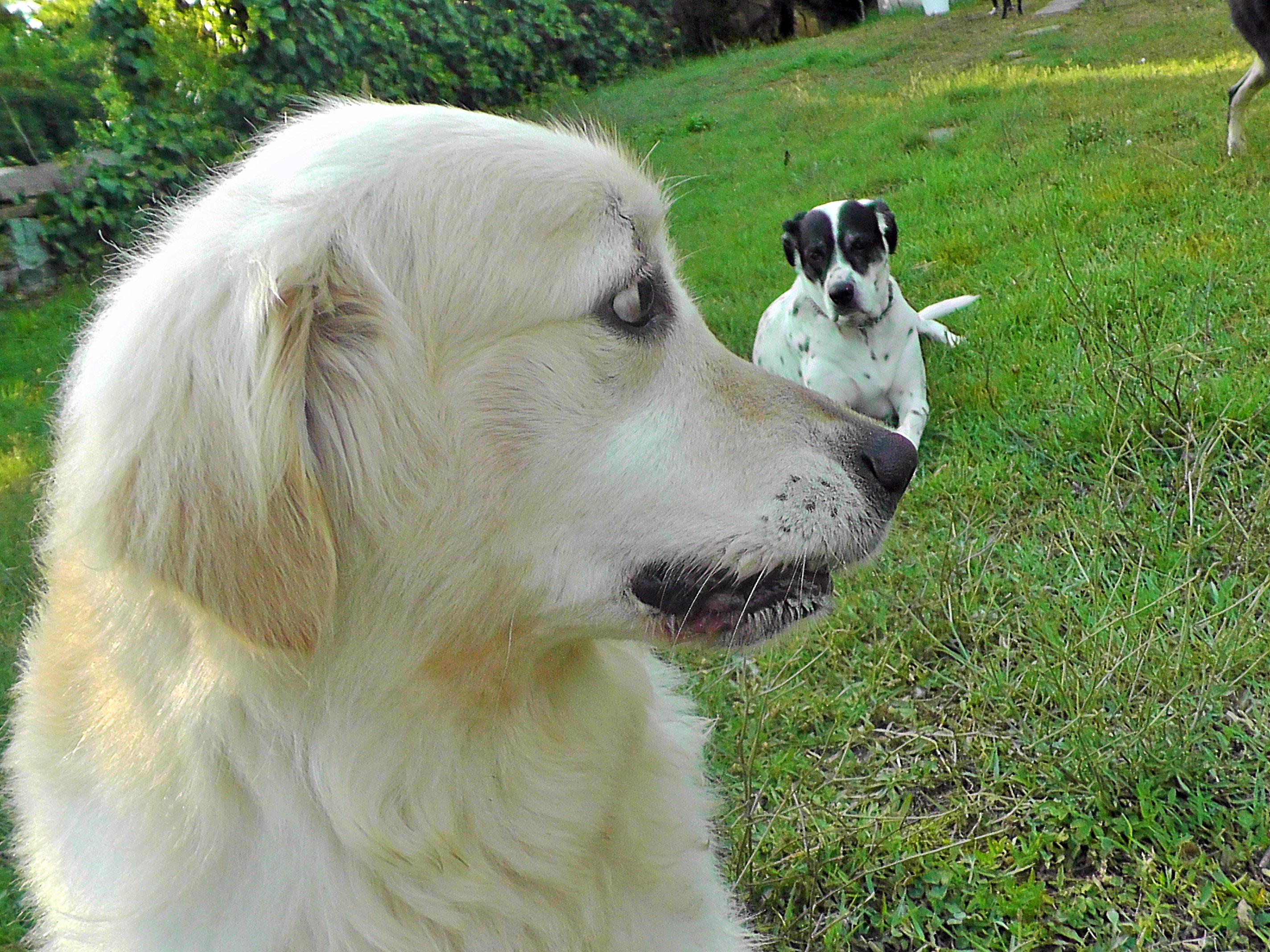 köpek-pansiyon-4