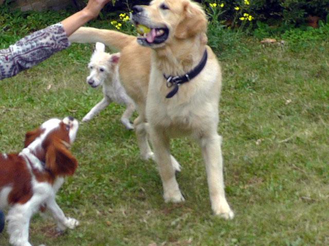 köpek-pansiyonu 1