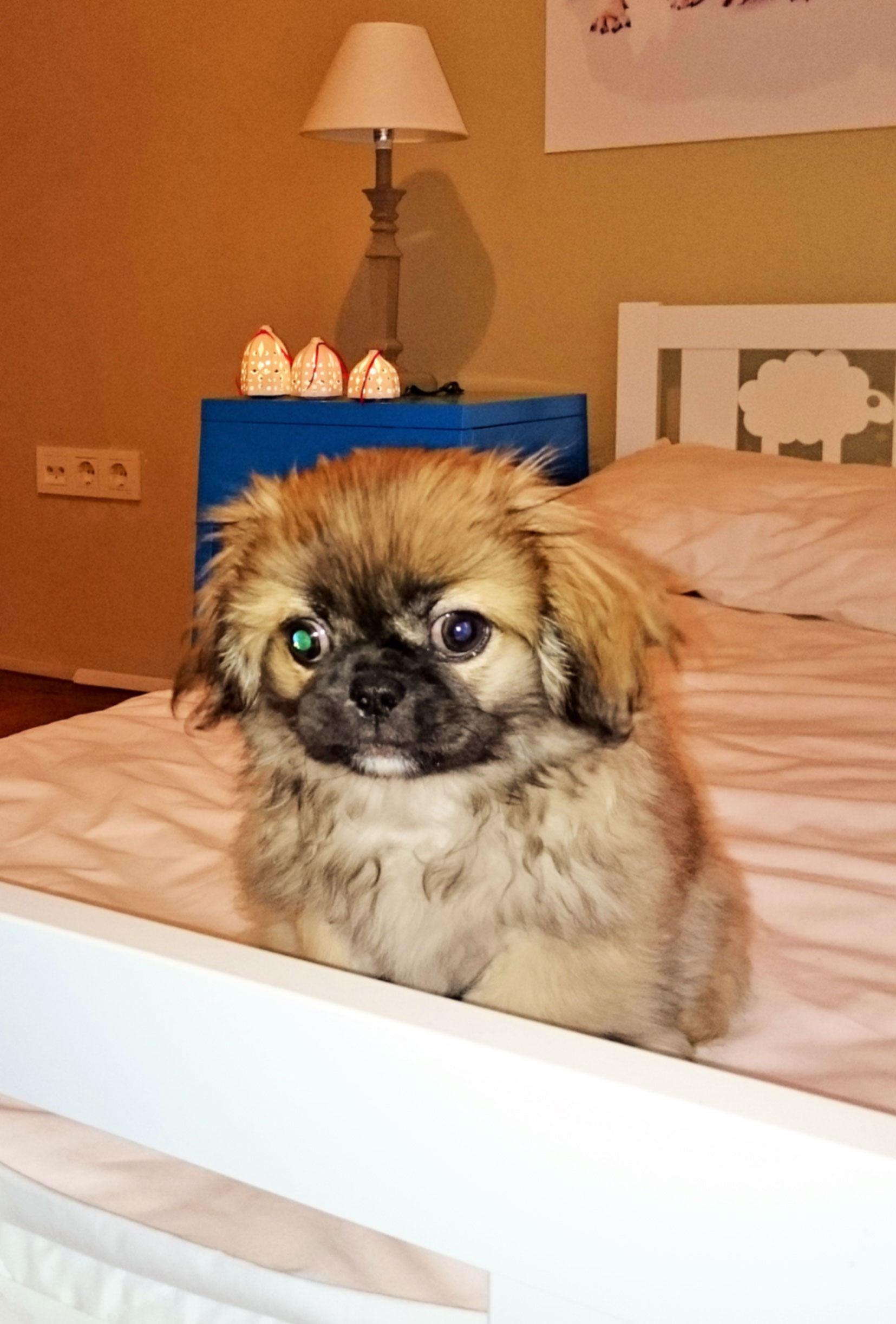 dog-hotel 2