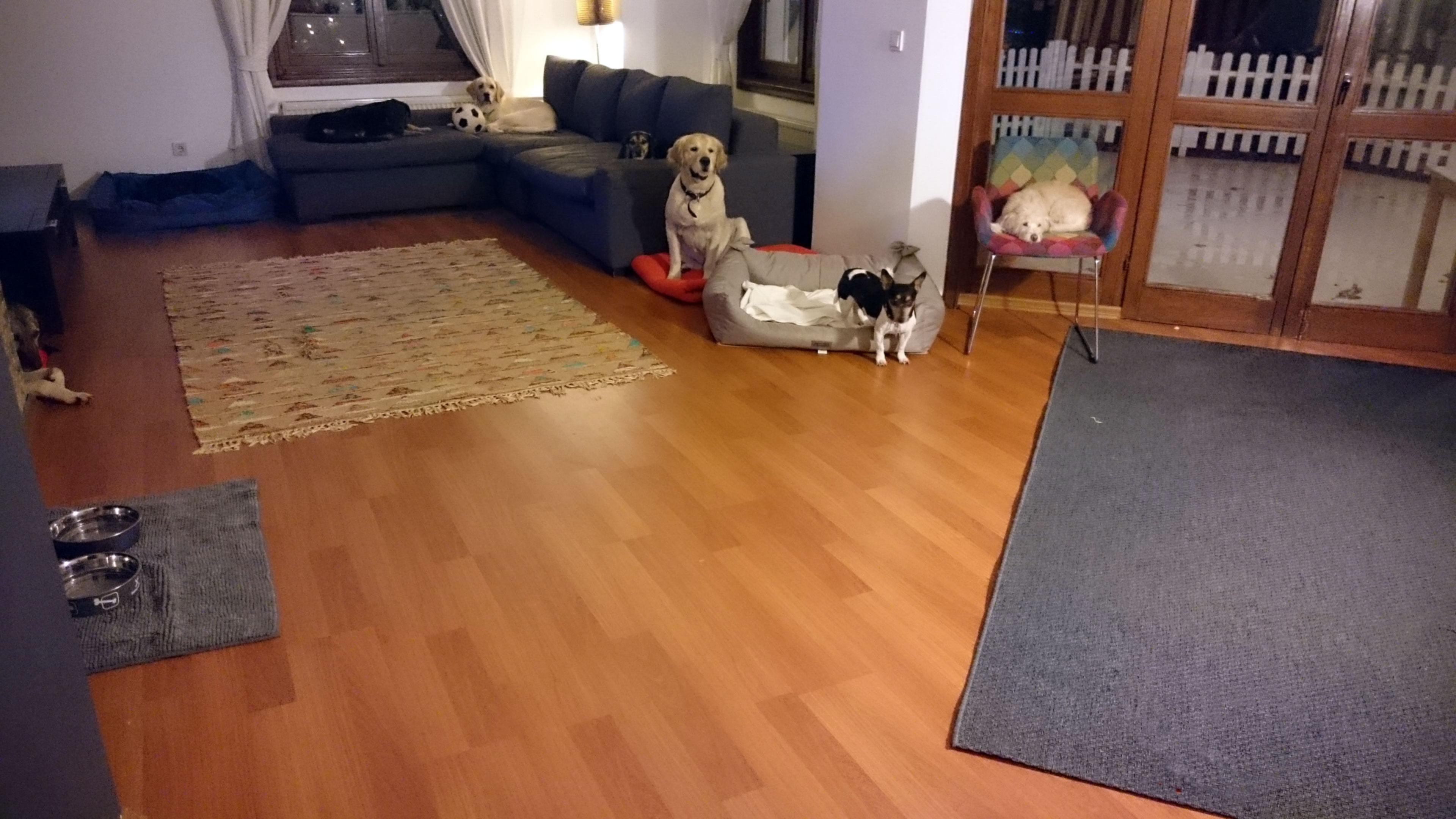 köpek-kuaförü 1