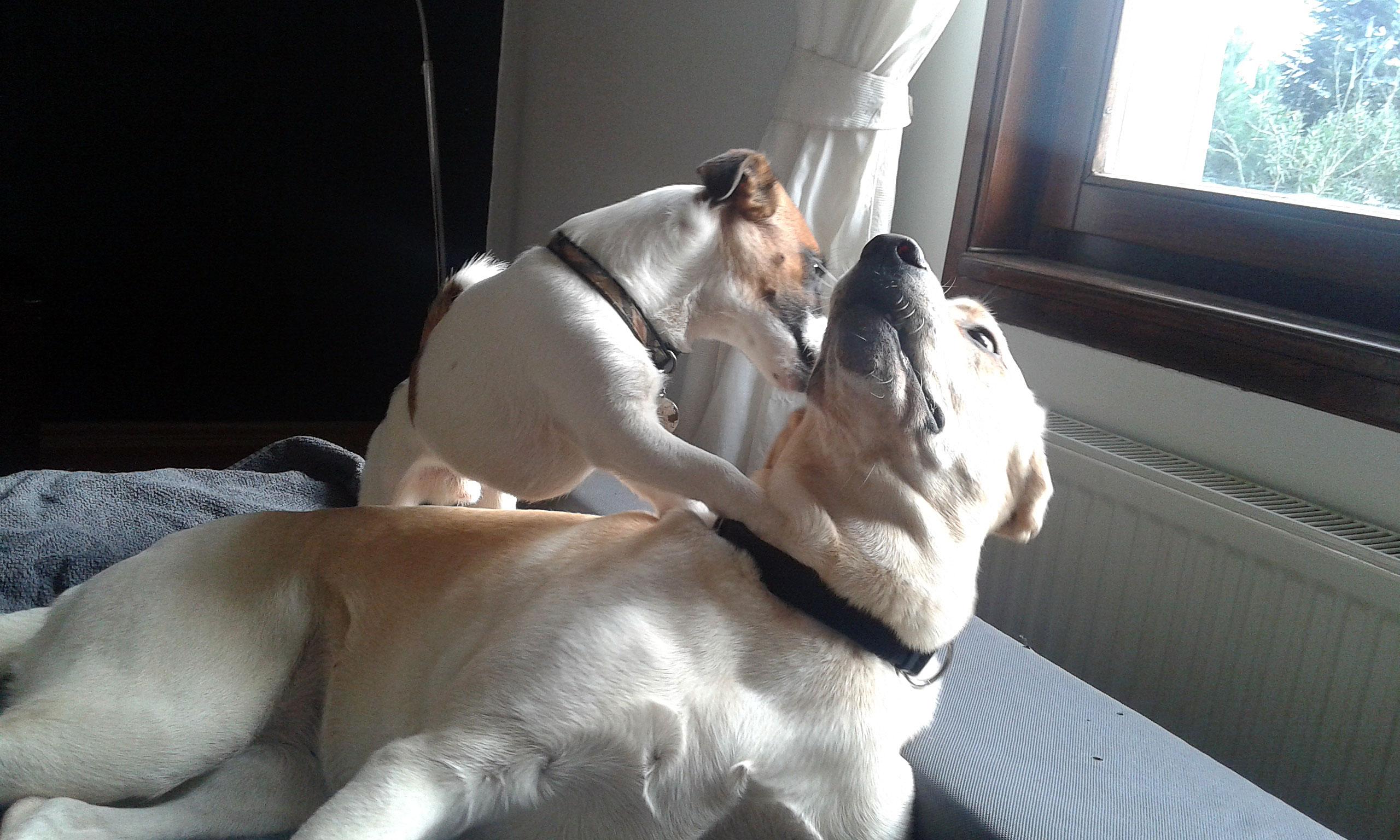köpek-kuaförü 5