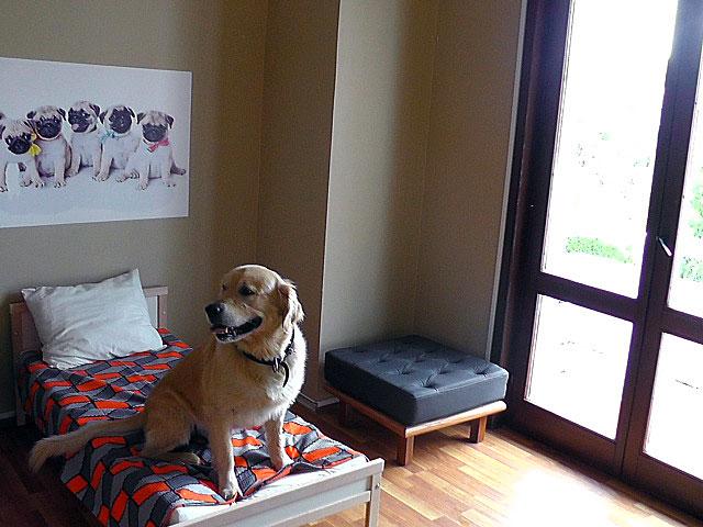 köpek-pansiyonu 2