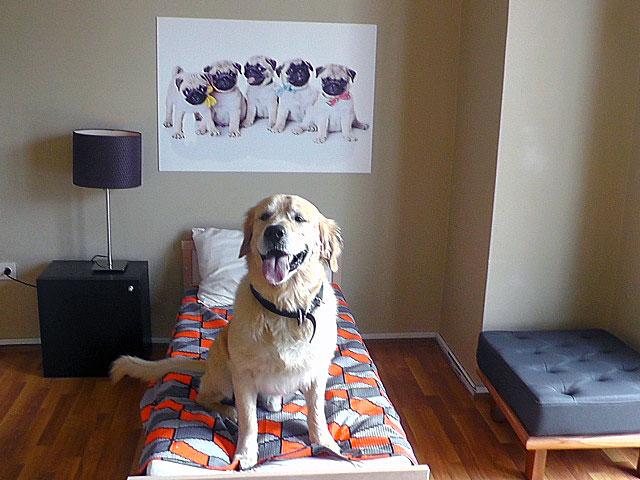 köpek-pansiyonu 3