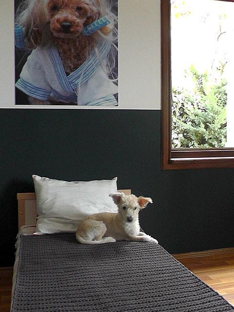 köpek-pansiyonu 6