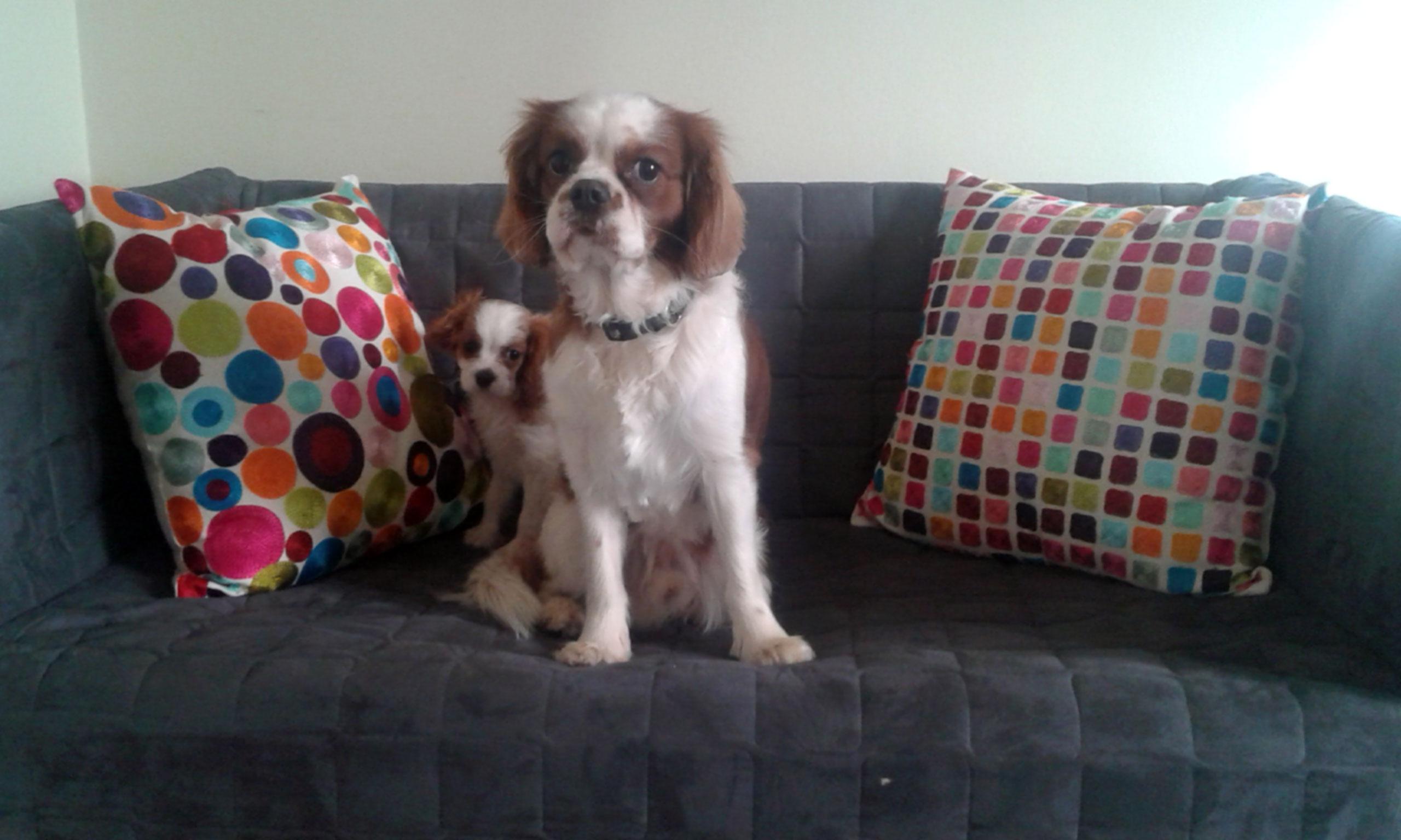 köpek-pansiyonu 8