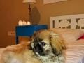 dog-hotel 3