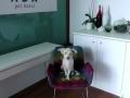 dog-hotel 5