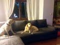 köpek-kuaförü 2