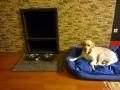köpek-kuaförü 3