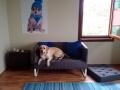 köpek-kuaförü 4
