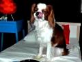 köpek-kuaförü 6