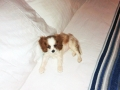 köpek-pansiyonu 5