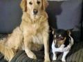 köpek-pansiyonu 9