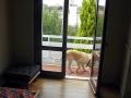 köpek-pansiyonu