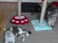 kedi-pansiyonu 1
