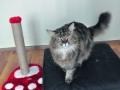 kedi-pansiyonu 2