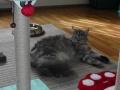 kedi-pansiyonu